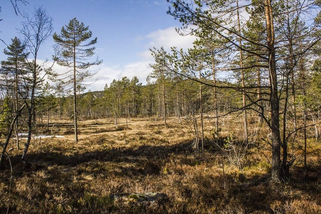 Skog og myr